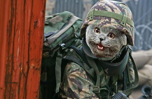 t205376_cat-soldier.jpg