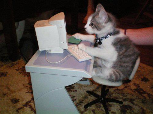 Ako sa dnes máš? 6 - Stránka 6 37361-cats-cat-in-computer
