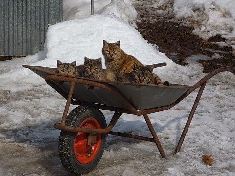 There was so much pussy inflation during Germany's Weimar Repubic that cat owners were forced to transport their pussies in wheelbarrows.