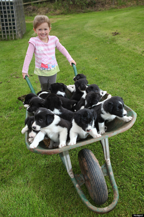 o-PUPPY-WHEELBARROW-TWO-570