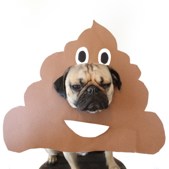 poopdog
