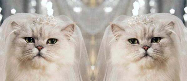 You meow kiss the bride. The other bride.