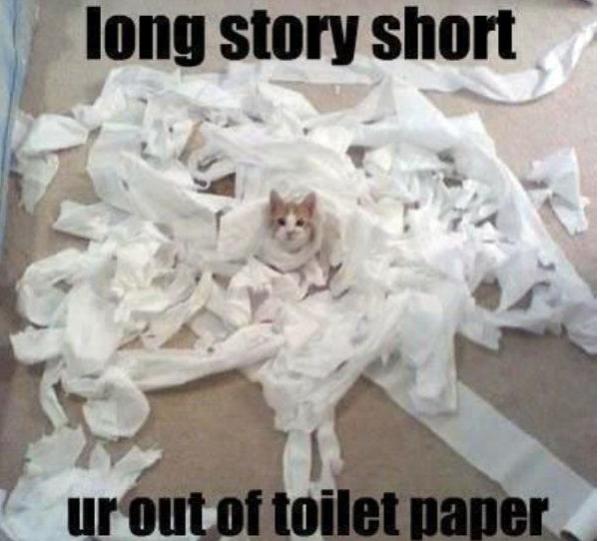 toiletpapercat